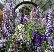 ogród zimowy