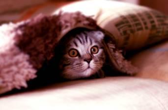 mały kot pod narzutą